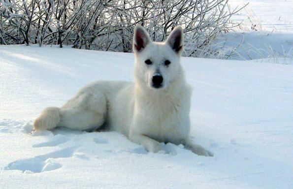 Vinter Beyaz3 Dec01