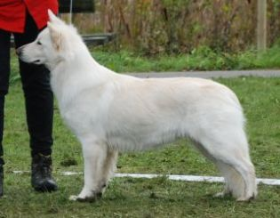 Zigi_0926.jpg-for-web-normal